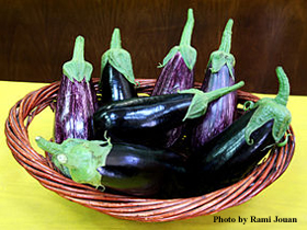 320px-Corbeille_d'aubergines_edited-1