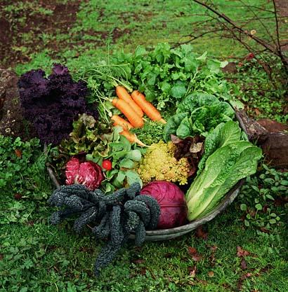 veggieharvest