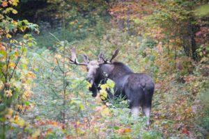 Vermont wildlife climate change